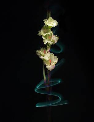 Photograph - Gladiolus Variation#02 by Richard Wiggins