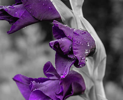 Photograph - Gladiolus_selective Color by Keith Smith