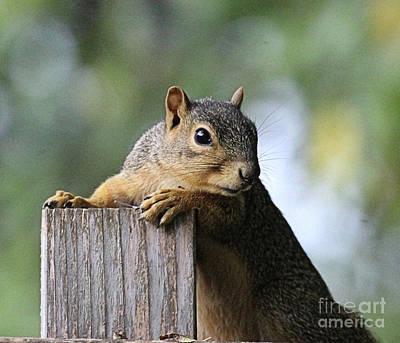 Glamour Shots - Squirrel Portrait Art Print