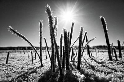 Photograph - Glare Of The Spring Sun by Ismo Raisanen