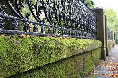Photograph - Glasgow Moss Fencing by Mary-Lee Sanders