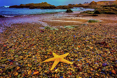 Glass Beach Starfish Art Print