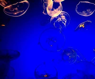 Photograph - Glass Effect by Kruti Shah