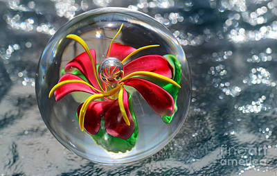 Photograph - Glass Flower On Ice by Karen Adams