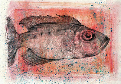Red Snapper Mixed Media - Glasseye Snapper by AnneMarie Welsh