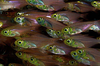 Travel Rights Managed Images - Glassfish 2 Royalty-Free Image by Rico Besserdich