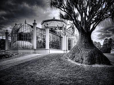Glasshouse And Tree Art Print by Wayne Sherriff