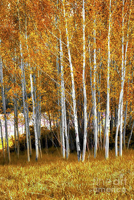 Photograph - Gleaming Fall Aspens by Susan Warren