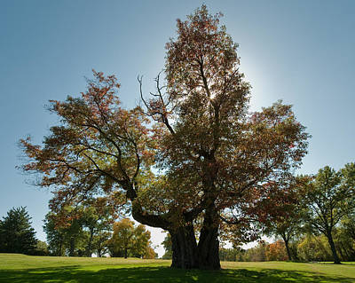 Photograph - Glen Echo Country Club Logo Tree by David Coblitz