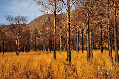 Scottish Highlands Wall Art - Photograph - Glen Torridon by Smart Aviation