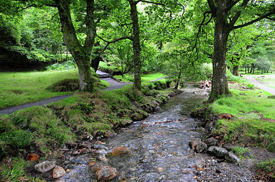 Photograph - Glendalough Stream. Ireland by Jenny Rainbow