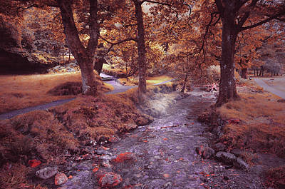Photograph - Glendalough Stream. Ireland. Series Fairyland by Jenny Rainbow