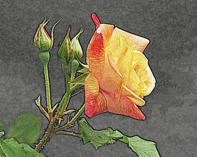 Glenn's Rose 2 Print by Michael Peychich