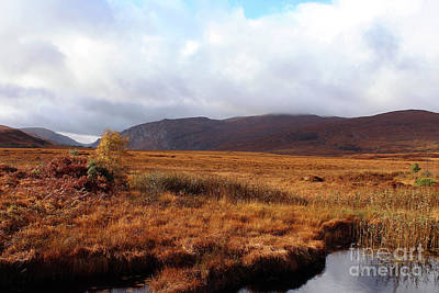 Staff Picks Cortney Herron - Wide Open Space Donegal Ireland by Eddie Barron