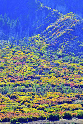 Photograph - Glenwood Springs Fall Color Spectacle by Ray Mathis