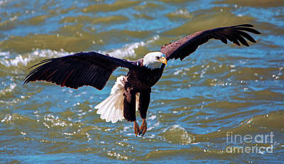 Eagle Photograph - Glide Pattern by Mike Dawson