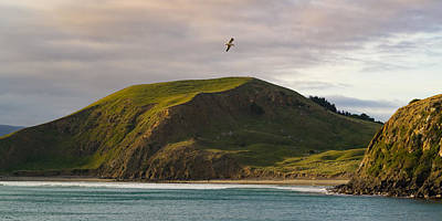 Riddler Photograph - Glide Time by Ian Riddler