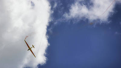 Marsupial Photograph - Glider by Martin Newman