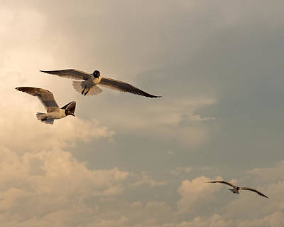 Photograph - Gliders by Don Spenner