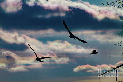 Photograph - Gliders by William Norton