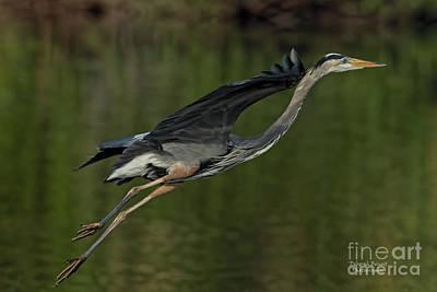 Photograph - Gliding Along by Deborah Benoit