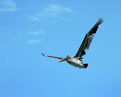Photograph - Gliding by Frank Mari
