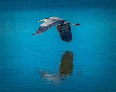 Photograph - Gliding Low by Leticia Latocki
