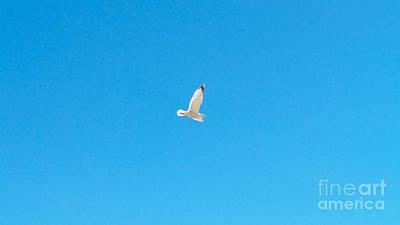 Gliding Seagull Art Print
