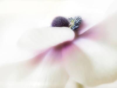 Photograph - Glimpse Of Perfection. by Usha Peddamatham