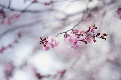 Photograph - Glimpse Of Spring by Jenny Rainbow