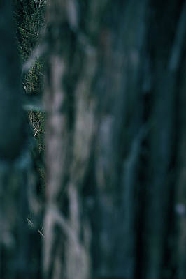 Photograph - Glimpse Of Tree by Andreas Gerden