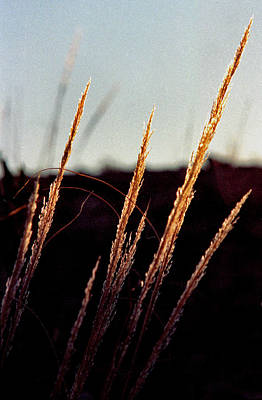 Photograph - Glistening Grass by Randy Oberg