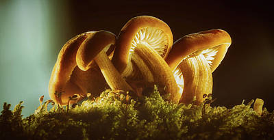 Photograph - Glistening Mushrooms by Andreas Dobeli
