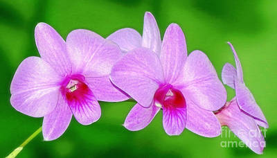 Photograph - Glistening Orchids by Sue Melvin
