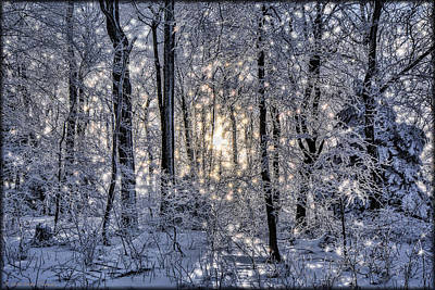 Photograph - Glistening Trees by Erika Fawcett