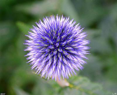 Photograph - Globe Thistle by Lisa Wooten