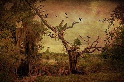 Photograph - Gloomy Day by Carolyn Dalessandro