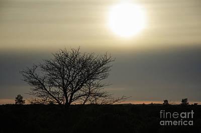Photograph - Gloomy Tree Silhouette by Kennerth and Birgitta Kullman