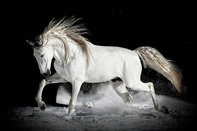 Photograph - Glorious Andalusian by Wes and Dotty Weber
