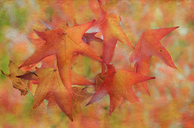 Photograph - Glorious Autumn by Angie Vogel