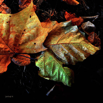 Photograph - Glorious Autumn Colors by Gerlinde Keating - Galleria GK Keating Associates Inc