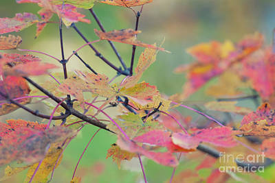 Photograph - Glorious Autumn by Dale Powell