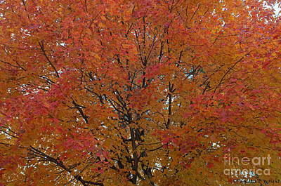 Photograph - Glorious Autumn by Paulette B Wright