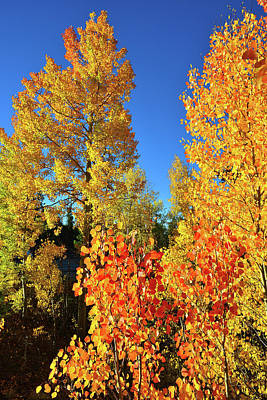 Photograph - Glorious Color Along Dillon Reservoir by Ray Mathis