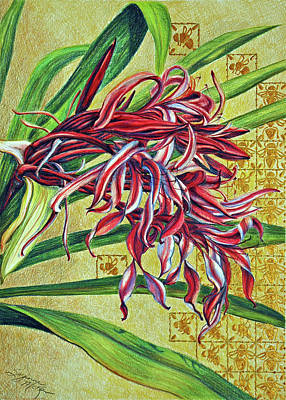 Drawing - Glorious Crinum by Suzanne McKee