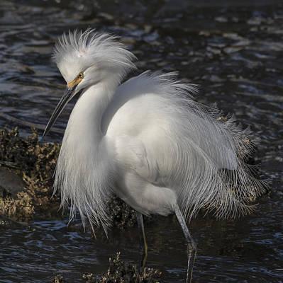 Egret Photograph - Glorious Egret by Bruce Frye