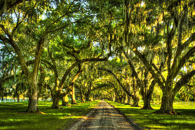 Photograph - Glorious Entrance Tomotley Plantation South Carolina  by Reid Callaway