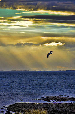 Photograph - Glorious Evening by Jan Amiss Photography