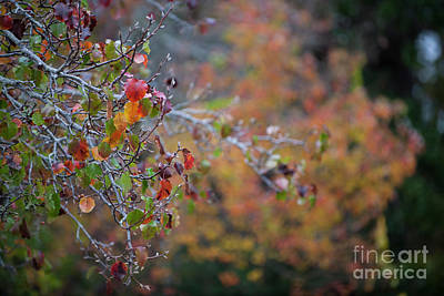 Photograph - Glorious Fall by Dale Powell