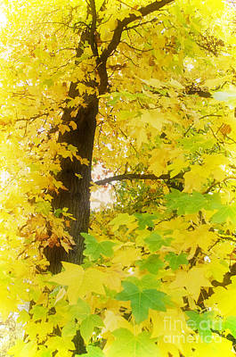 Photograph - Glorious Fall by Jim And Emily Bush